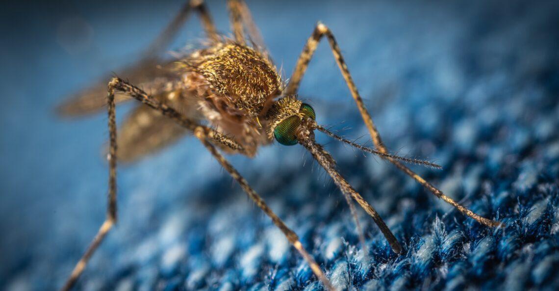 Czy komary przenoszą koronawirusa? #3