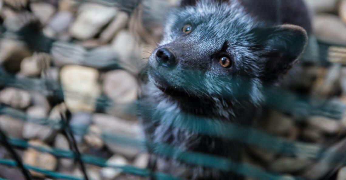 Piątka dla zwierząt - sprawdzamy wypowiedzi polityków